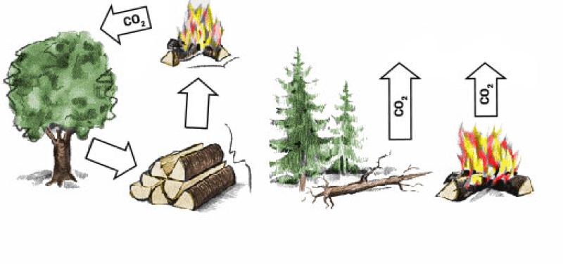 Lemnele de foc şi balaţa ecologică în natură